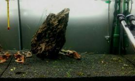 松皮石造景水草缸好丑啊水草缸怎么破
