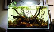 沉木青龙石原生态鱼缸32