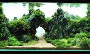 青龙石MOSS造景ADA作品