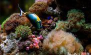 养殖海水观赏鱼的设备和方法有哪些