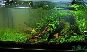 水草造景老人新帖水草缸希望专家指点交流鱼缸水族箱鱼缸水族箱