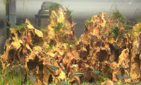 鱼缸造景试摆小缸石景鱼缸水族箱鱼缸水族箱