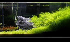 60x30x30神奇DIYLED石头超干净不长藻
