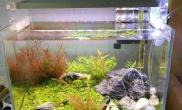 新手时期的一个小超白水草缸怀念沉木杜鹃根青龙石水草泥