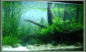 [回忆]第一个80cm无CO2的养原生鱼草缸造景  [3P]