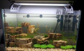 水草造景为了这么个玩意水草缸自己给自己一刀鱼缸水族箱擦鱼缸水族箱鱼缸水族箱鱼缸水族箱