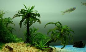 【转载】水中的海南风情