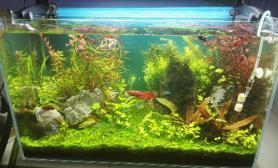 60的缸水草缸感觉造景一般水草缸还能怎么改进水草缸多指点沉木杜鹃根青龙石水草泥