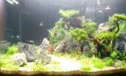 60x30x36的草缸:一眉、红绿灯、斑马各4条、虾20只