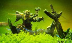养龟?养鸟?养蝌蚪?你的草缸里都养过哪些奇葩?