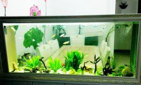 我家的1图片8米屏风缸水草缸太乱了水草缸砖家给点建议
