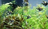 热带水草常见的栽种方法