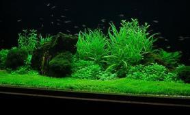 沉木青龙石水草造景150CM及以上尺寸设计28