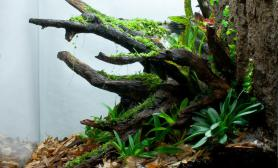 雨林水陆生态缸24