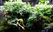 雨林风格的水陆