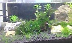 水草造景自造小草缸