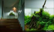 美美的楼梯口小缸水草缸美美的享受