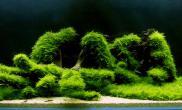 沉木青龙石水草造景150CM及以上尺寸设计15