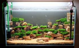 80*45*45 木化石+莫斯 种草注水+设备调教
