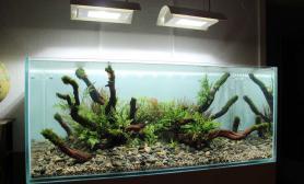 水草缸造景沉木水草泥化妆砂青龙石120CM尺寸设计61