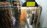 水草之巅迎新冬-水草缸大师级别,在缸中植树造林!