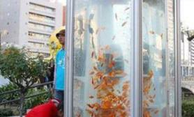 日本一电话亭变身金鱼缸(多图)