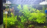 鱼缸造景家里的小缸水草水草缸安定的绿山心情