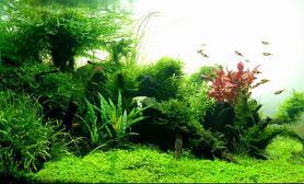 日本Charm水草造景比赛-15