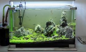 祝贺南美重新开业鱼缸水族箱办公室60小缸祝贺鱼缸水族箱
