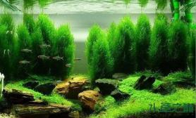 【转载】草缸中的原始森林