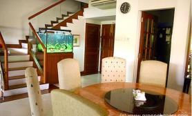 沉木青龙石造景缸与家装空间-09