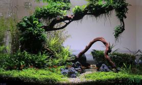 妖娆沉木造景水草缸真是不可多得