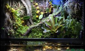 亚马逊水陆缸——原生态的精彩之处鱼缸水族箱你应该懂得鱼缸水族箱