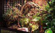 水族箱造景大前门的沼泽缸与变色龙