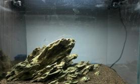 40小缸 松皮石骨架求指导沉木杜鹃根青龙石水草泥(种草后更新水草缸更新图)