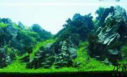 水草造景2015ADA水草造景大赛作品