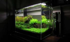 发一简单的石景缸水草缸纯秀状态来的