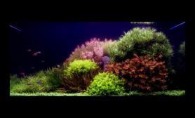荷兰景90cm草缸造景图片欣赏