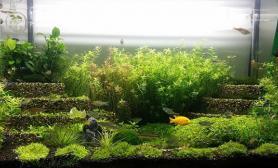 """我的90*45缸""""梯田变成了菜园子""""水草缸留作纪念"""