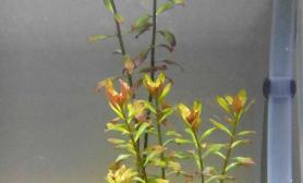 请教各位这个水草叫什么名?