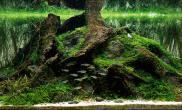 水草缸造景沉木水草泥化妆砂青龙石90CM尺寸设计57