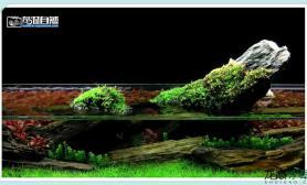 水族箱造景神农与你分享之ADA矮缸造景全过程