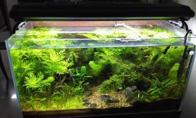 求指点这缸的草该如何去修剪会更好?
