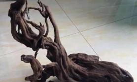 大家看看这木头适合做南美风格造景么?