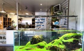 国外水族店水草缸造景ExoticAquatic