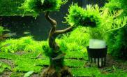 我喜欢的一颗水草树