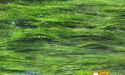 水草培育的几大要素