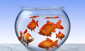 鱼缸摆放位置好可辟邪