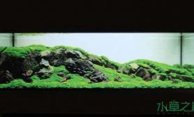 [交流]ADA国际水草造景比赛2011年度最佳作品集锦