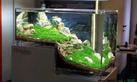 水草缸与家装设计